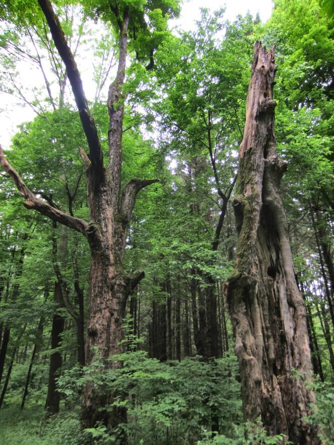 treeseries6